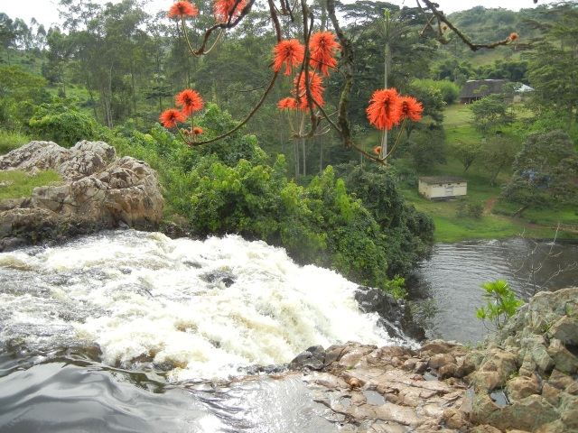 Bright, happy flowers at the top of Ssezibwa Falls, near Jinja, Uganda represent my joyful mood at the end of 2 weeks here. (photo from file Fall 2012)