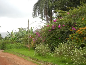 A lovely view of Lake Victoria and the beautiful vegetation prior to the storm