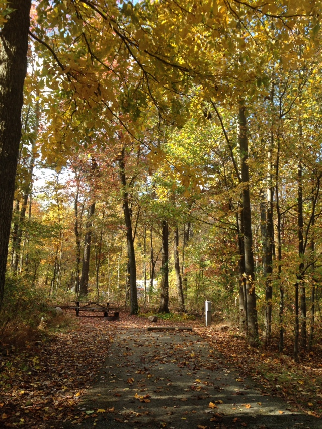 A walk in the woods along a pathway covered with fallen leaves in French Creek State Park, PA Oct-2014