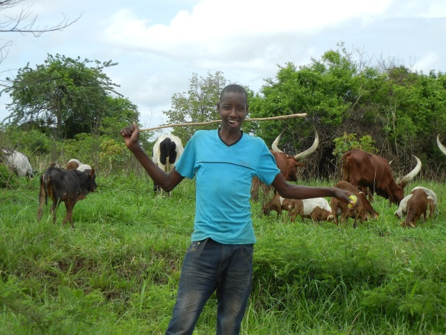 This is a real cowboy herding the Ankole Cattle along the road.  He was very happy to pose for this picture.
