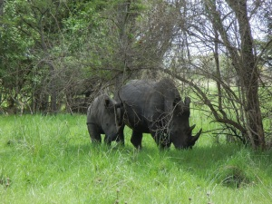 This is a Mama Rhino with her baby.